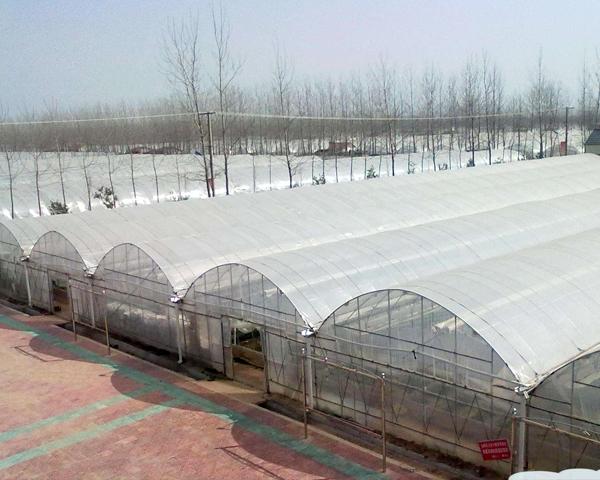 贵州连栋温室大棚