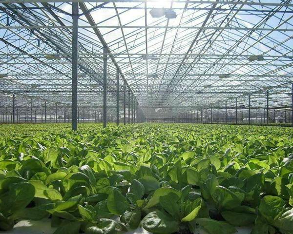 蔬菜智能温室大棚