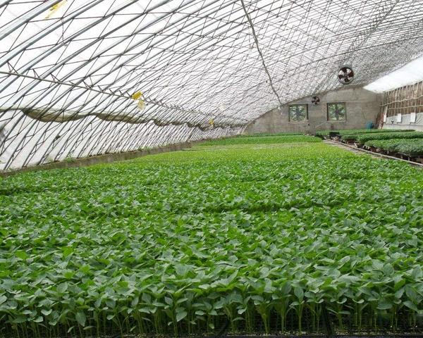 贵州智能温室大棚