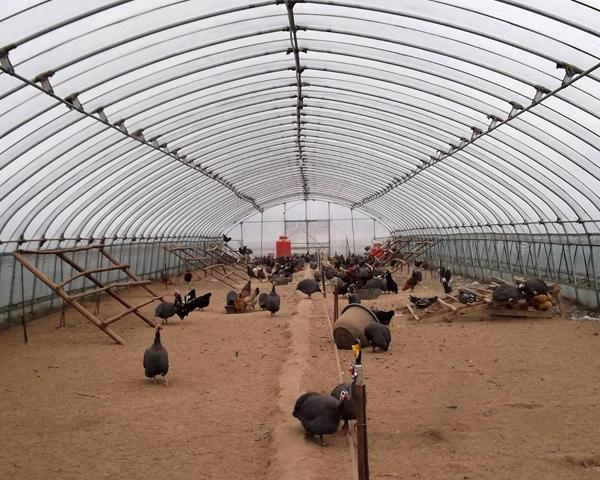 肉雞養殖大棚